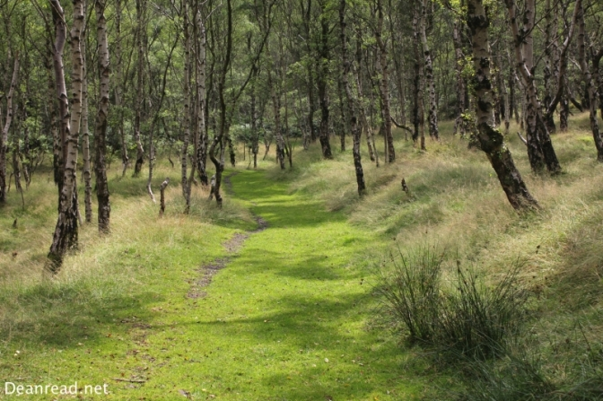 Walking through the forest from Bolehill Quarry