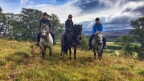 Cairngorms – Horse Riding – Newtonmore