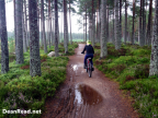 Cairngorms – Mountain Biking – Glenmore Forest