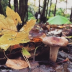 Autumn – Forest Wild Camping – Tarp & Bivvy