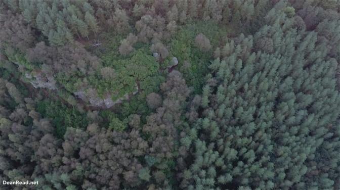 forest-wild-camp-dji-hammock8
